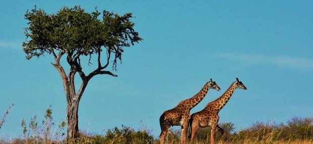 vacunas para viajar a Tanzania