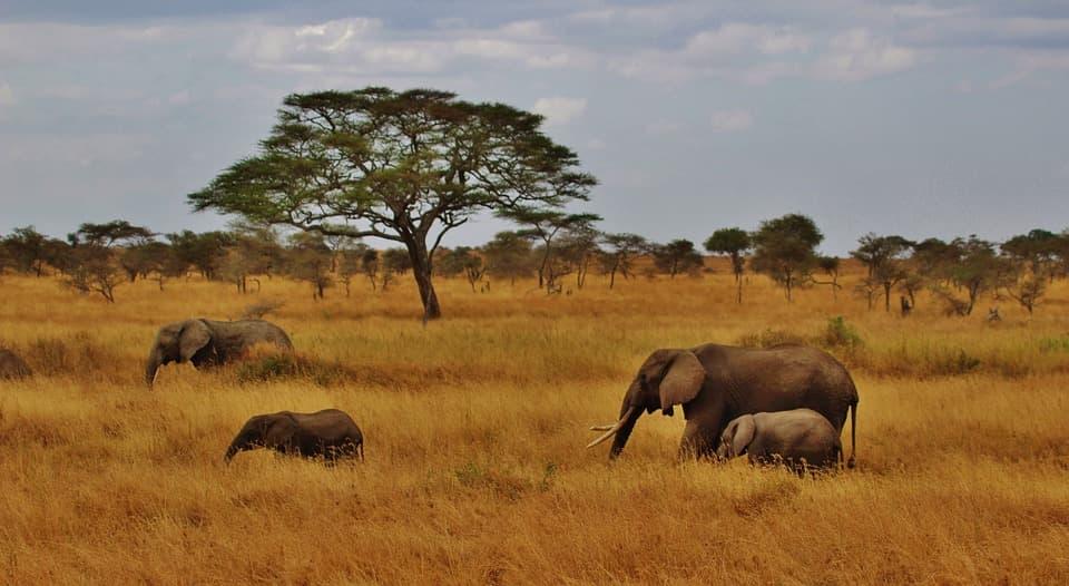 mejor época para viajar a Tanzania