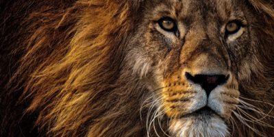 safari en África para la luna de miel