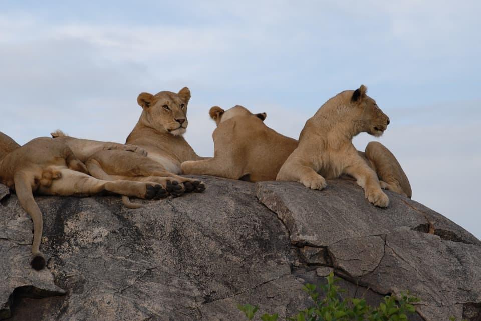 safari en Tanzania con niños